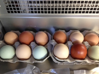 Our hen's eggs